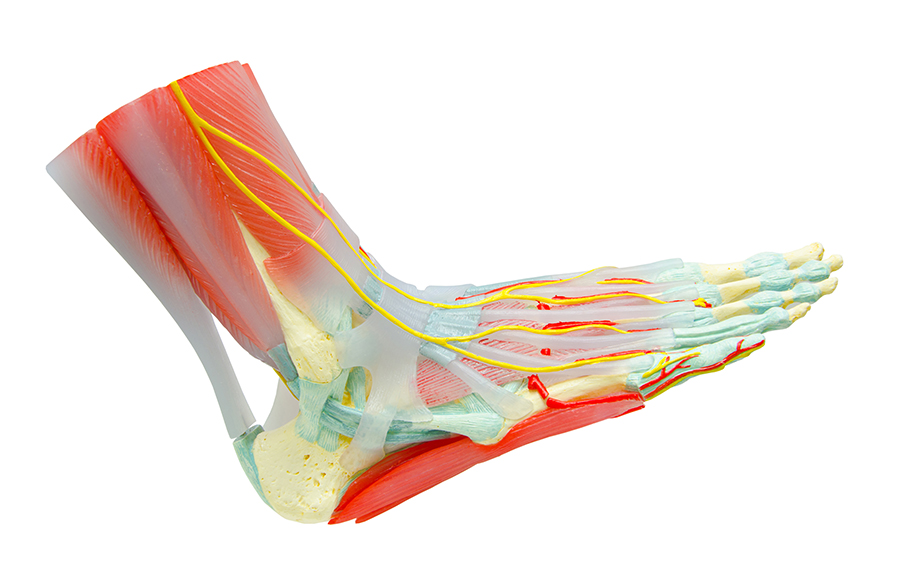 Achilles Tendon Injuries - Causes and Treatments Mesa AZ